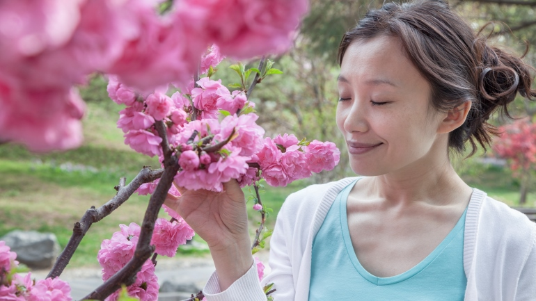 woman smelling cherry blossoms